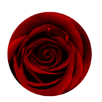 anal rose adventure